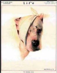 Image result for life magazine pitbull cover